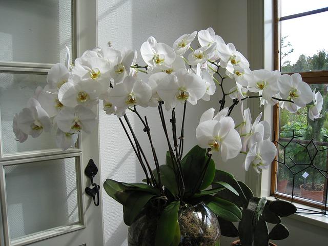 Mulți dintre români au această plantă în casă! Dacă și tu o ai, ar trebui s-o arunci imediat! Este un adevărat pericol… Nici nu te-ai fi gândit!