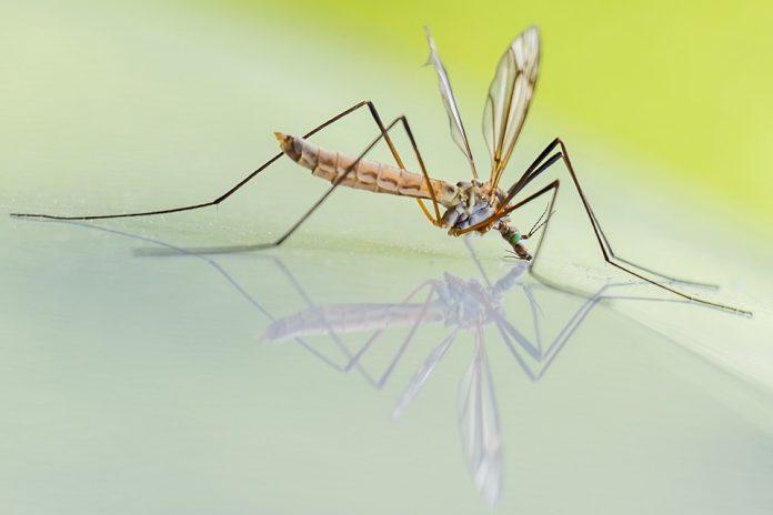 cum sa scapi de tantari și muște