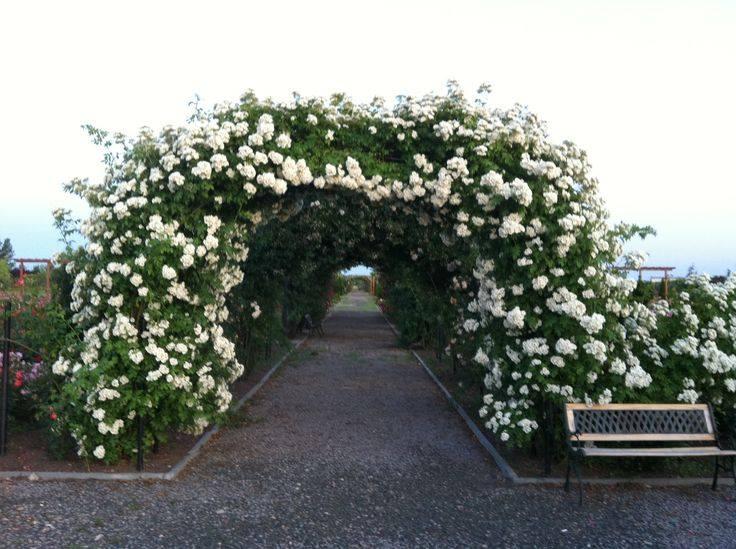 eutopia gardens cea mai mare gradina de trandafiri din romania