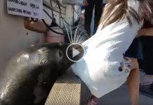 fetita trasa in apa de o foca