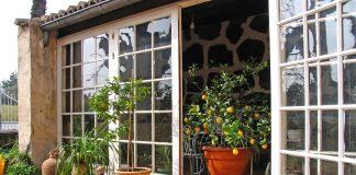 lamai- - plante de apartament