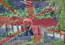 romani in uk locuri de munca agricultură