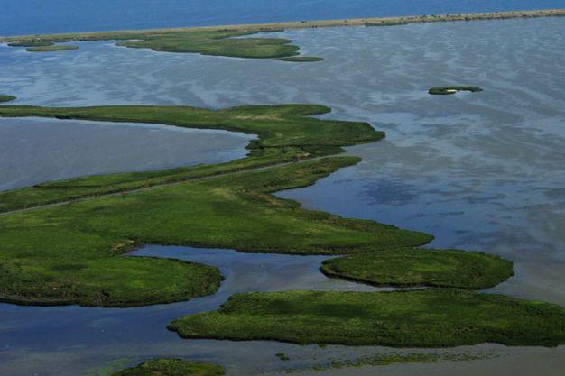 Insula Sacalin Delta Dunarii