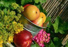 gradina cu fructe si flori