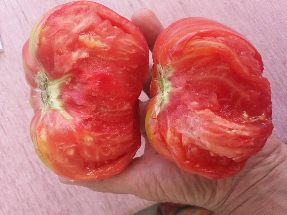 rosia-pom de romania