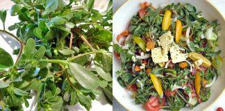 salata iarba grasa