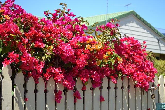 Flori De hartie naturale