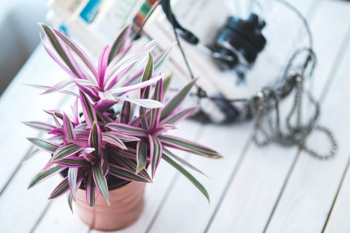 plante de interior
