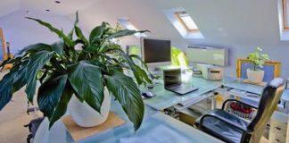 plante de apartament benefice