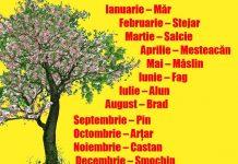 copacul destinului